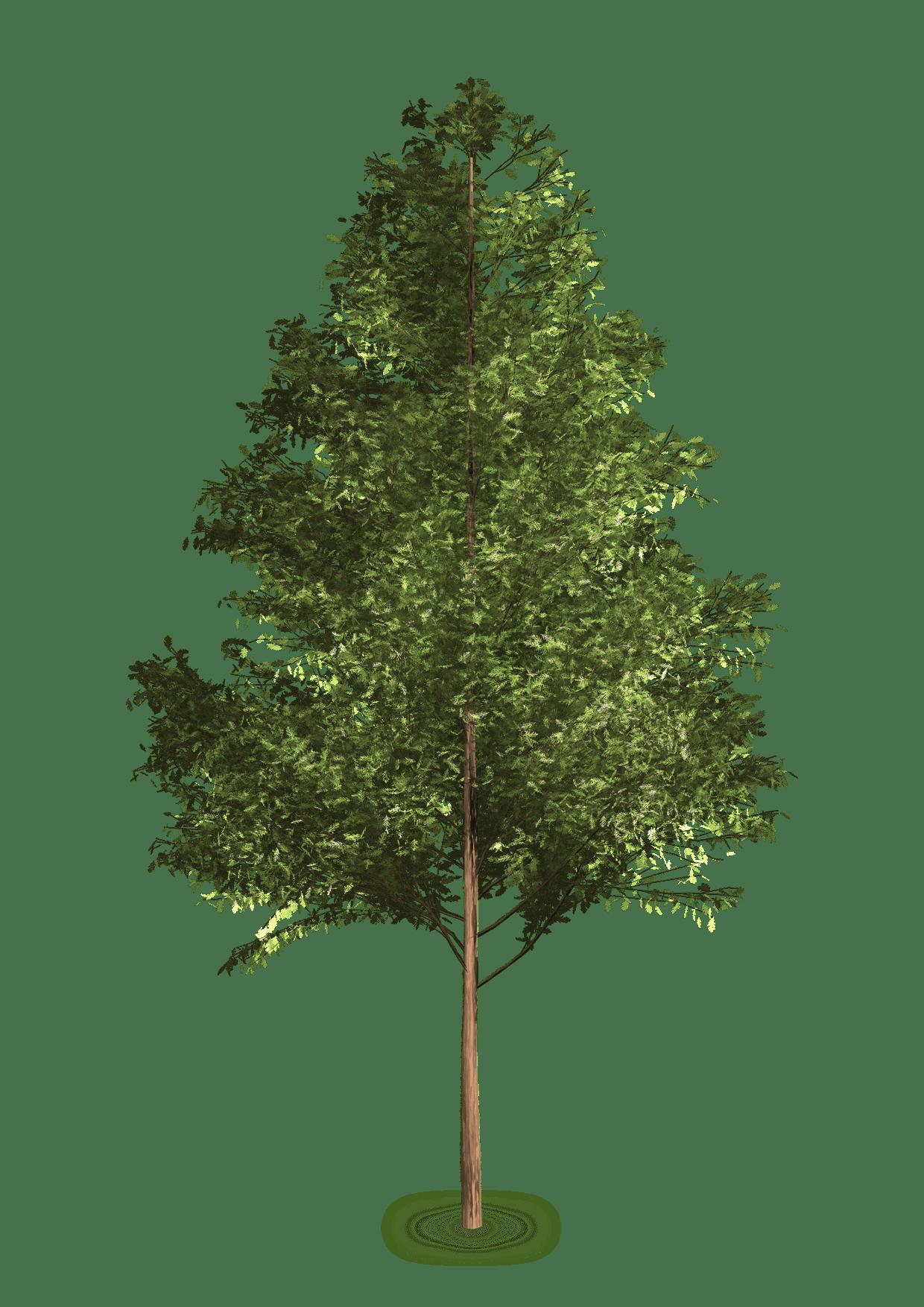 サスティナビリティの木